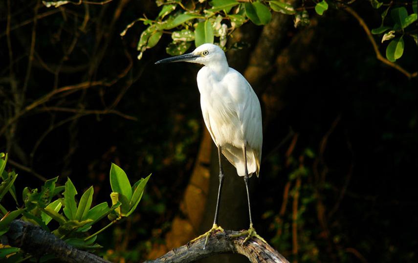 Foto: birdingsrilanka.com